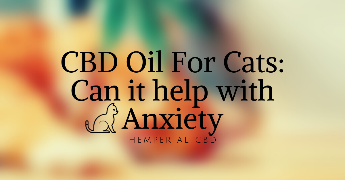 CBD Oil for Cats: Can it help with Anxiety?